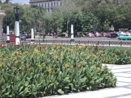 Capitolio, vista parcial jardines área norte (foto del autor)