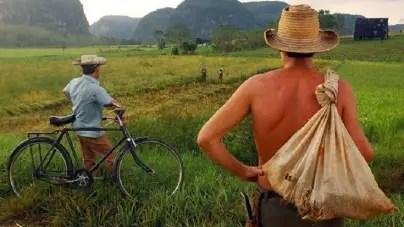 """Campesinos exigen """"medidas urgentes"""" para contener hambruna en Cuba"""