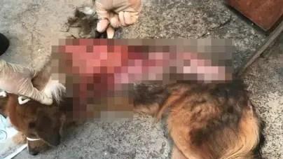 Mujer quema a un perro callejero en otro caso de maltrato animal en Cuba