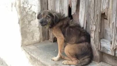 Maltrato animal en Cuba: un demonio casi invencible