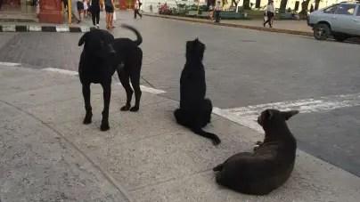 Defensores de animales en Cuba denuncian sacrificio de perros callejeros