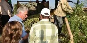 ¿Un camino vietnamita para la agricultura cubana?