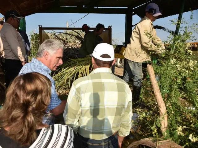 Miguel Díaz-Canel, Agricultura, Cuba, Vietnamita