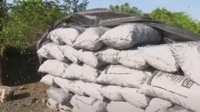 Desmantelan red de robo y venta ilegal de arroz en Granma