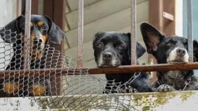 Régimen cubano aprueba decreto que regulará política de bienestar animal