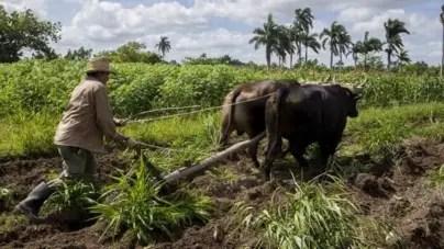La agricultura sigue trabada