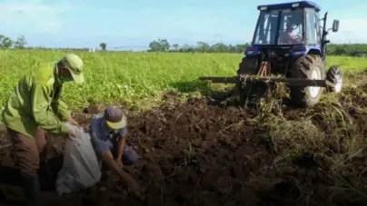 La falta de inversión en la agricultura cubana no se arregla con decretos-leyes