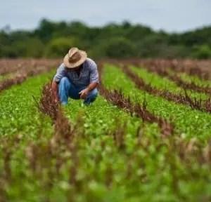 Recuperar la agricultura en Cuba: Un plan incierto