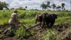 Las cooperativas agropecuarias continúan en crisis