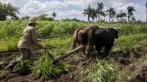 cooperativas, agricultura, Cuba