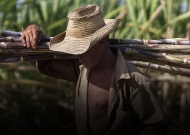 De cómo el castrismo destruyó la industria azucarera