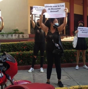 """Los cubanos """"han perdido el miedo"""": registran 159 protestas en febrero"""