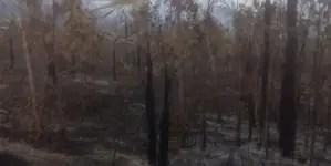Incendio forestal en Guantánamo deja daños severos a la flora y fauna