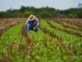 Ley de Reforma Agraria, Agricultura, Cuba