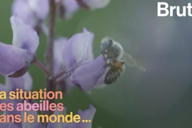 VIDEO. Quelle est la situation des abeilles à travers le monde ?