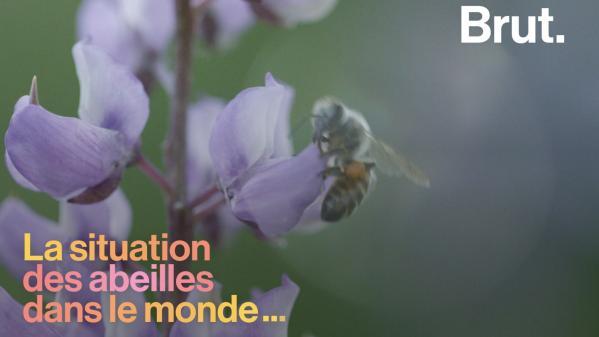 VIDEO. Quelle est la situation des abeilles à travers le monde ?