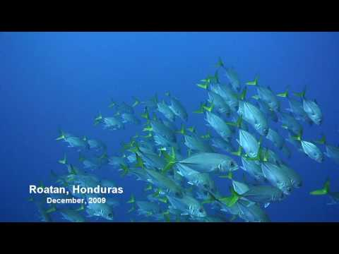 Want to know why I love diving in Roatan?