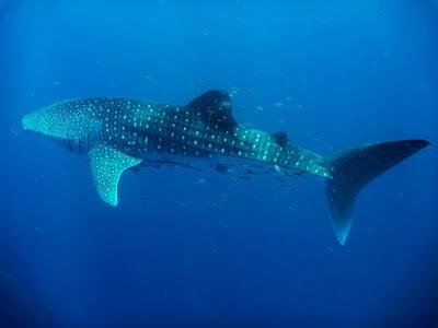 My Dream Underwater List