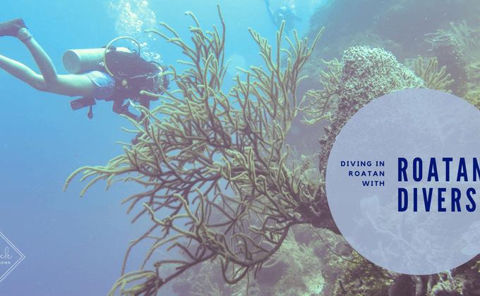 Diving in Roatan: Roatan Divers