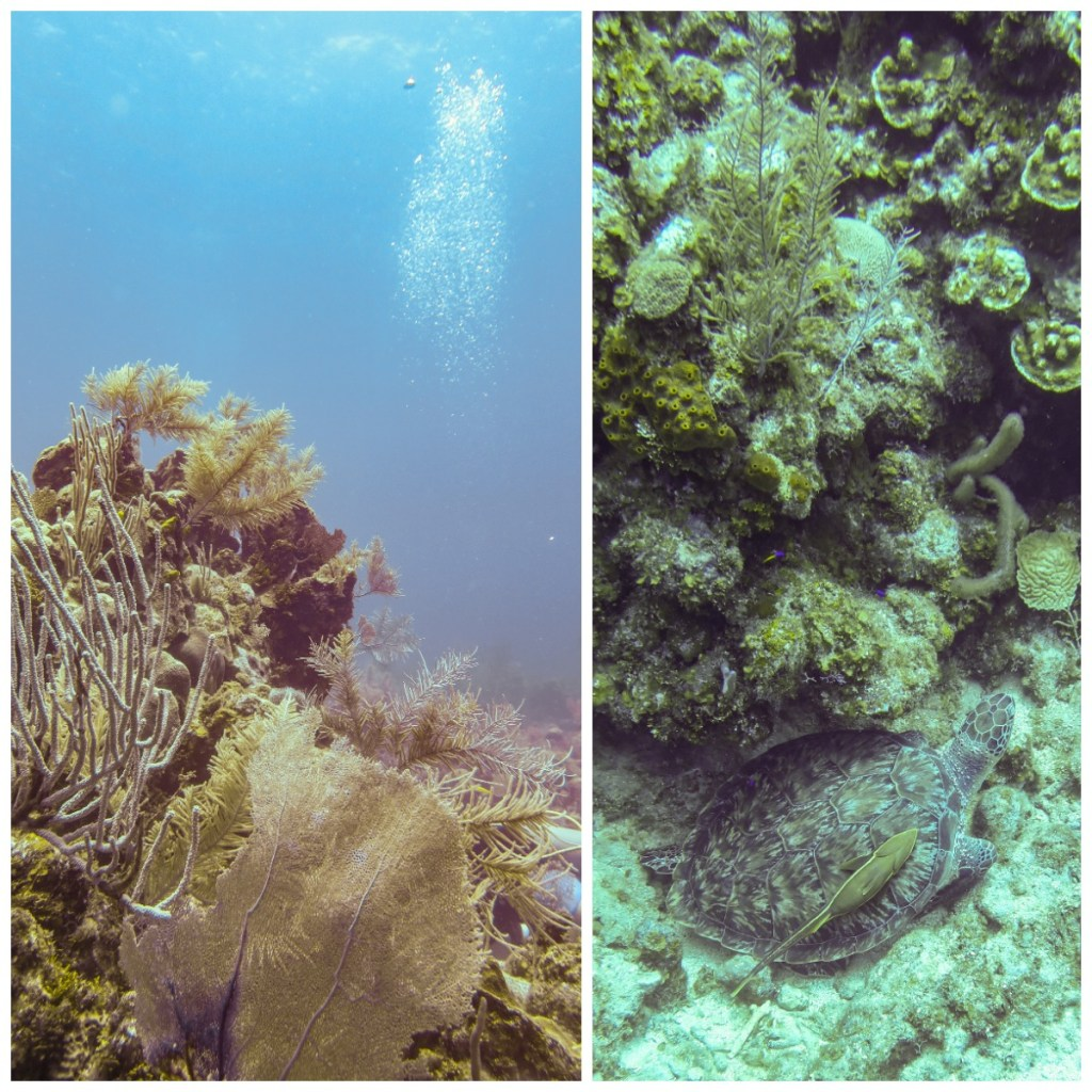 RD Diving 4