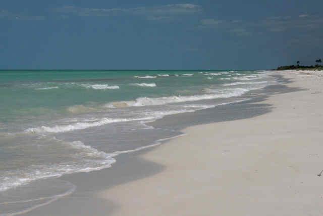 El cuyo Playas de Yucatan
