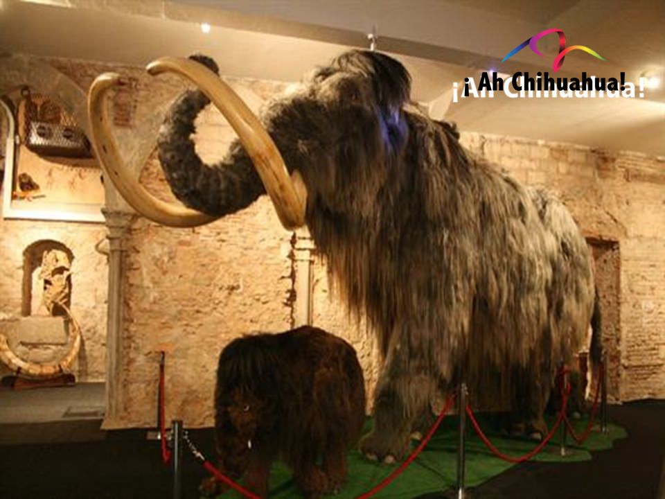 museo del mamut chihuahua atractivos turisticos