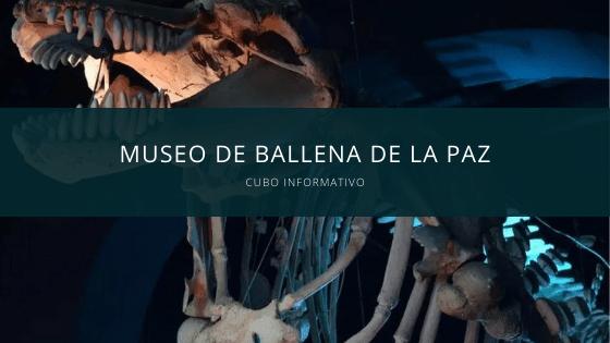 Museo de Ballena de la paz