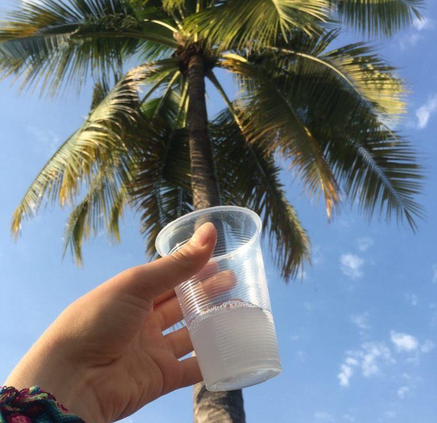 tuba bebida tipica de colima