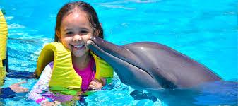 nado con delfines puerto morelos