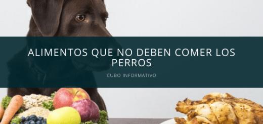 Alimentos que no deben comer los perros