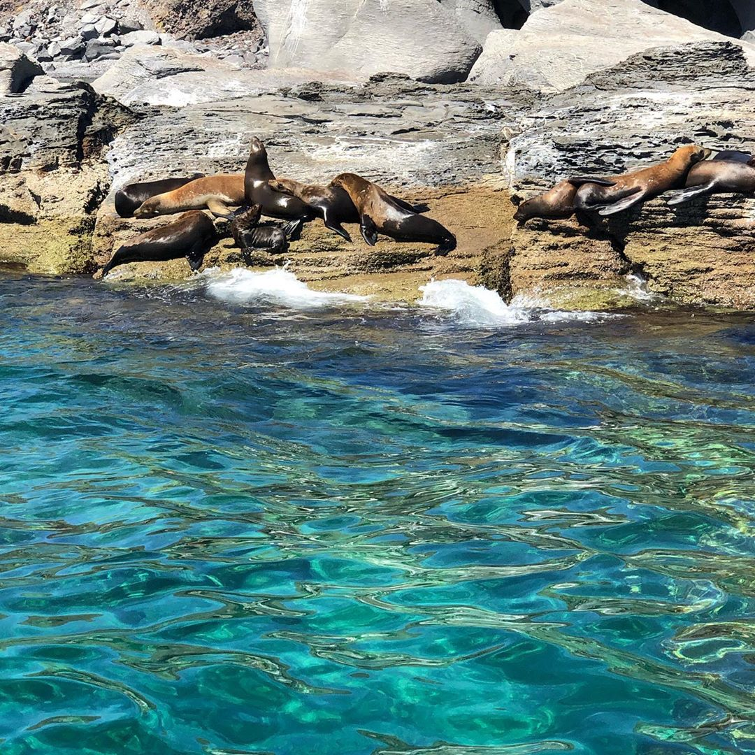Isla Coronado baja california sur