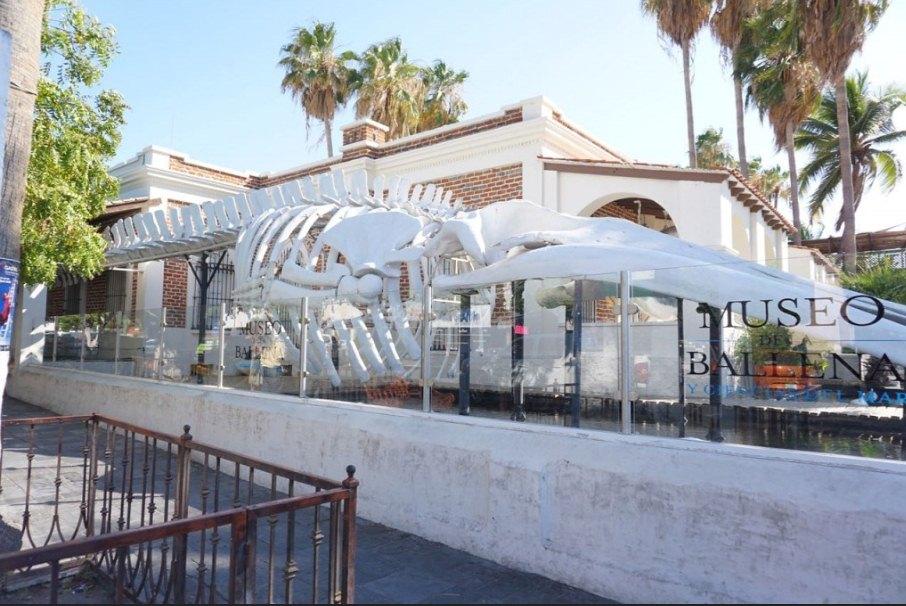 Museo de la ballena los cabos que ver en cabos
