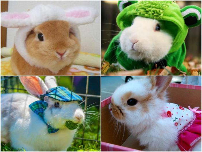 Outfit para tu Conejo