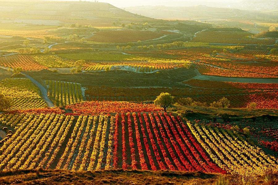 recorrer la ruta del vino de ensenada
