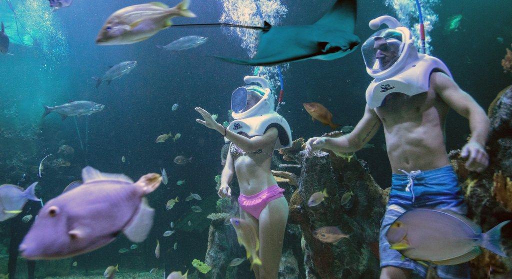 Acuario Interactivo actividades para niños en cancun