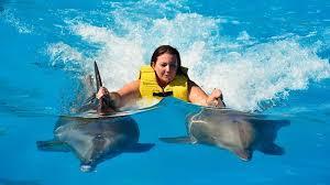 Nado con delfines actividad impresidible en cancun