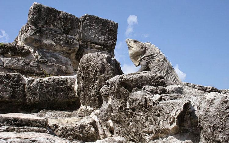 zona arqueológica de cancun