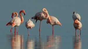 flamingos-1205366_960_720