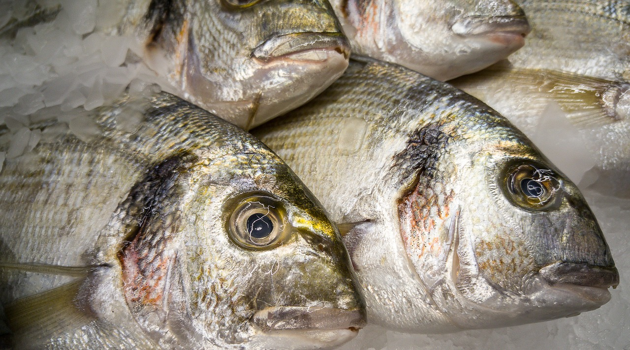 Sea breams fishes