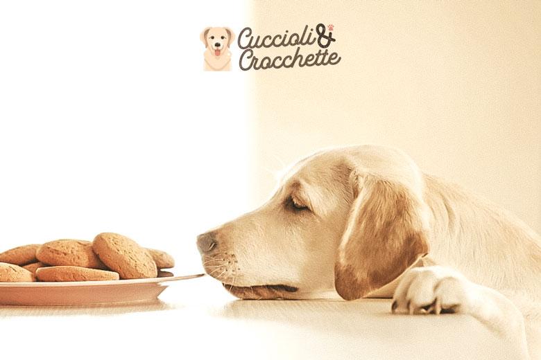 Cane che elemosina cibo a tavola