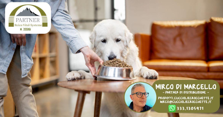 quanti pasti deve fare un cane
