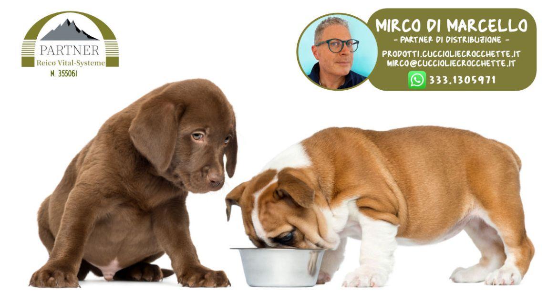 Reico crocchette cani prezzo