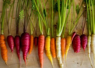 """FAO: """"Lo stato della biodiversità mondiale per l'alimentazione e l ..."""