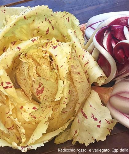 Radicchio rosso e variegato Igp dalla terra alla tavola