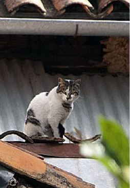 Cuenca street cats live among the eaves.)