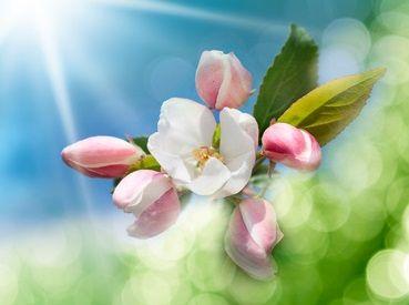 La hoja y la flor