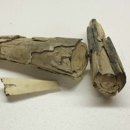 Mammoth Ivory-446