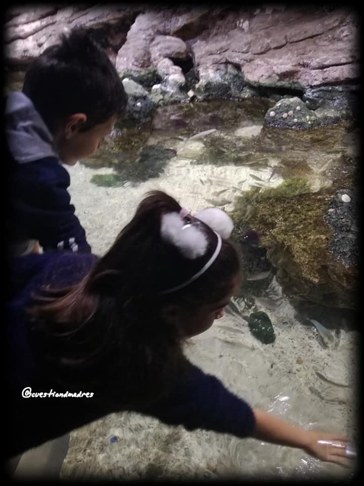 Aquarium de Donosti: Interactuando directamente con la fauna marina