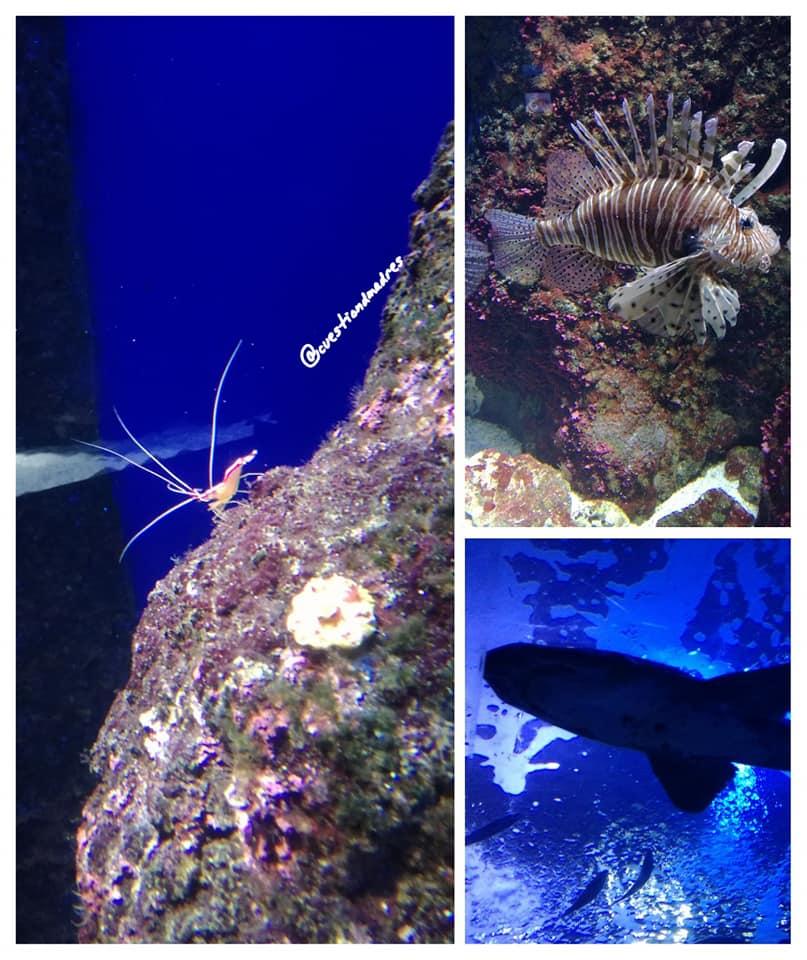 Algunas especies que se pueden ver en el Aquarium de Donosti
