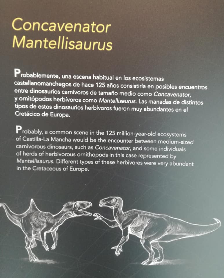 Museo de Paleontología de Castilla-La Mancha. Cartel explicativo del Concavenator